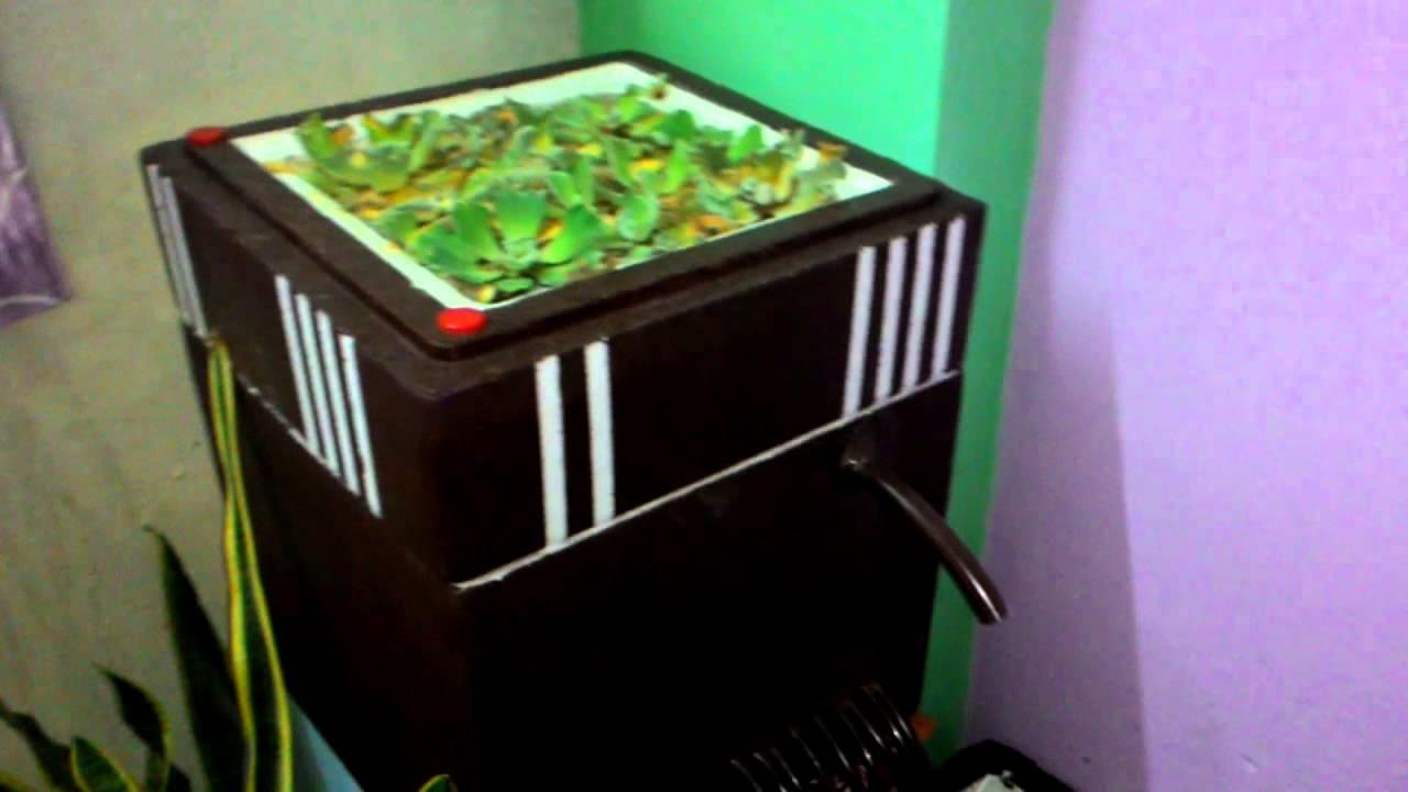 Indoor pond using styrofoam/thermocol box