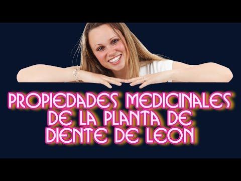 Propiedades Medicinales de la Planta de Diente de Leon