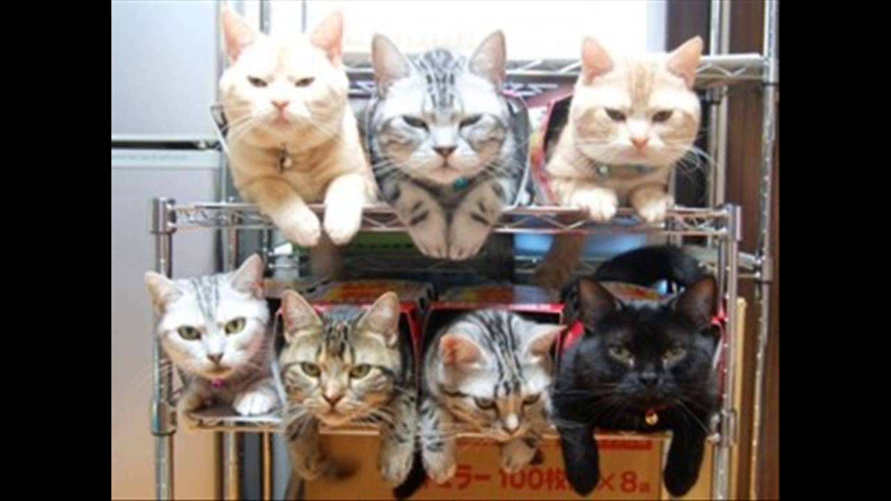 癒し系 おもしろ かわいい 猫 画像集 Youtube