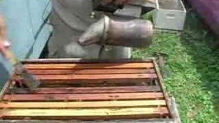 Principals of Beekeeping : Harvesting Honey From a Bee Hive