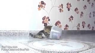 Веселые котята и щенки
