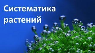 15. Систематика растений (6 класс) - биология, подготовка к ЕГЭ и ОГЭ 2019