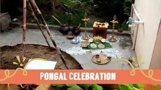 pongal celebration in tamil | pongal festival recipes | thai pongal festival | :