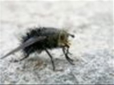 How To Handle Cluster Flies In Your House