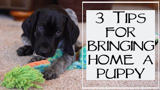 3 Things You Need To Know Before Bringing Home A New Puppy
