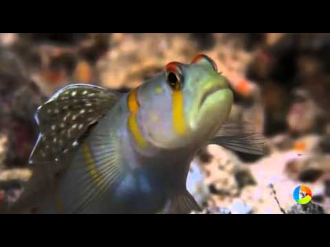 Fiji : Diving and Snorkeling