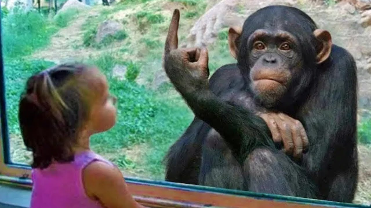 Animals Trolling Kid At The Zoo - Try Not To Laugh   Gangster Pet