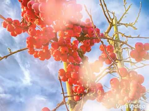 Blossom 🌸