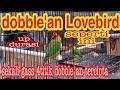 Dobelan Lovebird Bikin Durasi Makin Melar  Mp3 - Mp4 Download