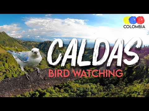Caldas: Department with Great Biodiversity in the Colombian Coffee Belt - Colombia Birdwatching