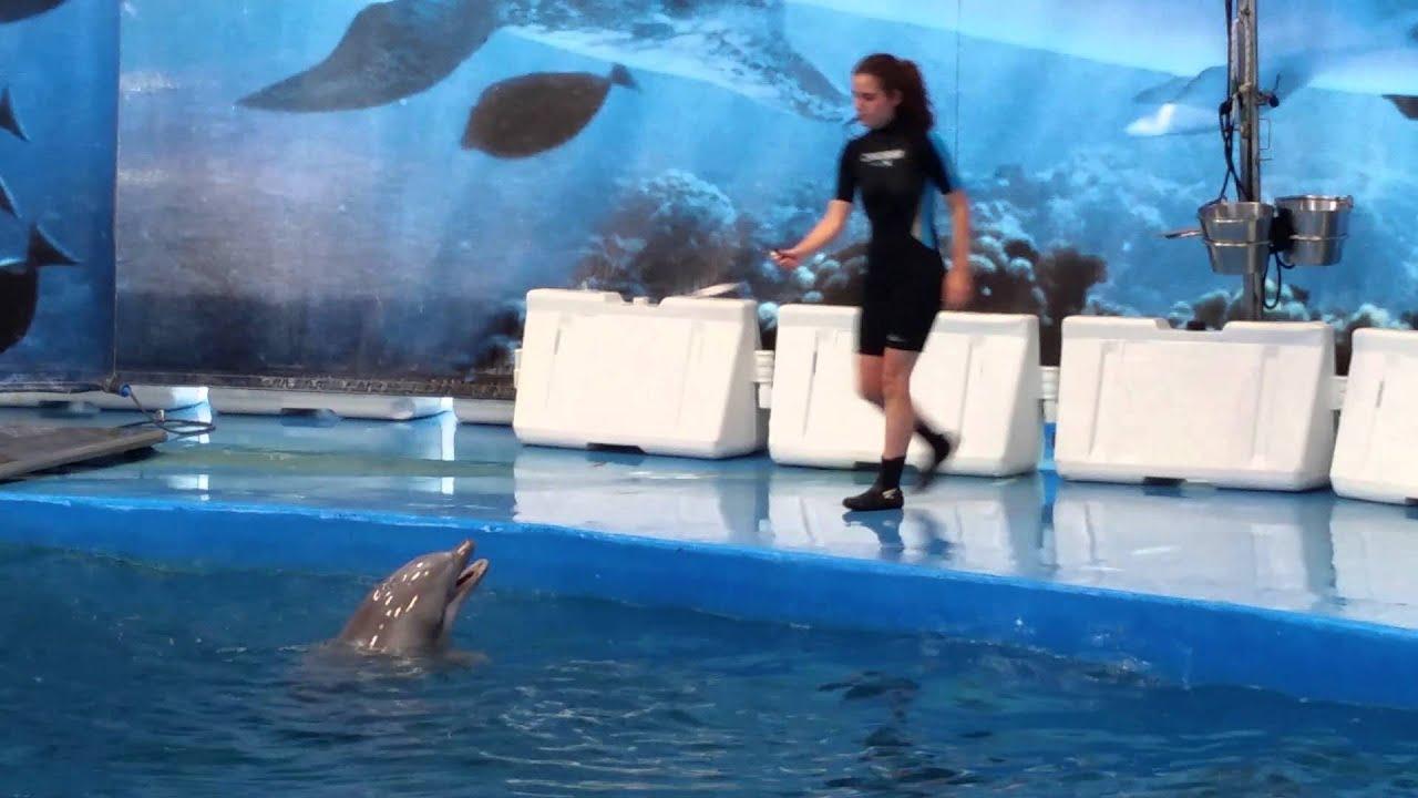 Dolphin Show Barcelona Zoo Part 2 Of 3 Youtube