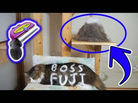 猫毛の富士山出現!?大型猫長毛種のファーミネーター【FURminator】