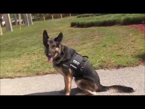 Aggressive Service Dog comes to Miami for Rehabilitation