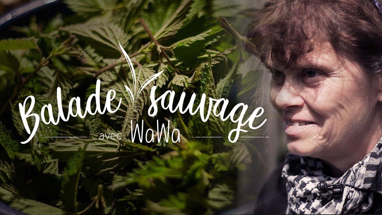 Balade SAUVAGE avec WAWA - à la découverte des plantes sauvages