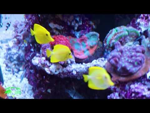 Crazy Custom reef tank by Quality marine!!!!!