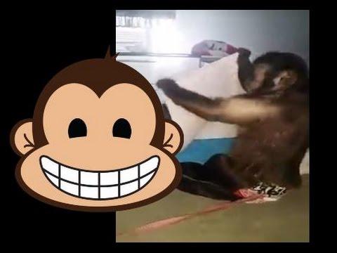 Becerikli Maymun Ev ??leri Yaparsa