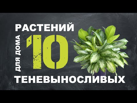 ТОП 10 ТЕНЕЛЮБИВЫХ РАСТЕНИЙ ДЛЯ ДОМА 🌿