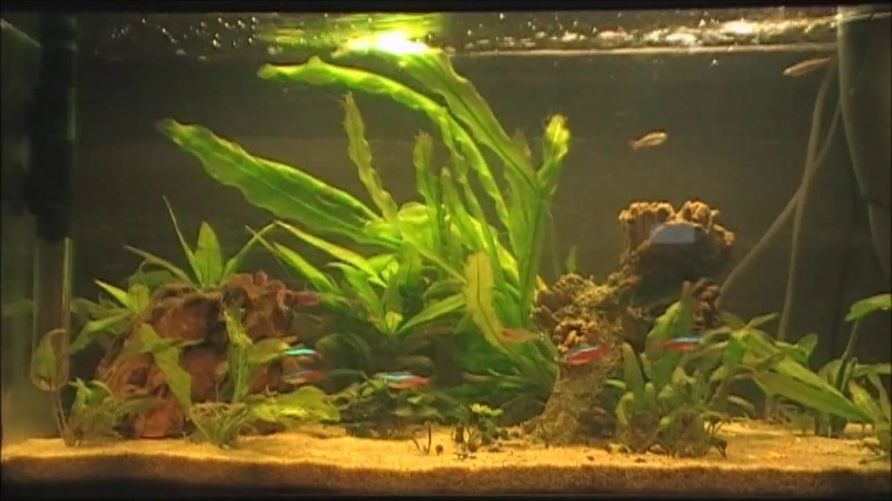 aquarium 60 liter youtube. Black Bedroom Furniture Sets. Home Design Ideas