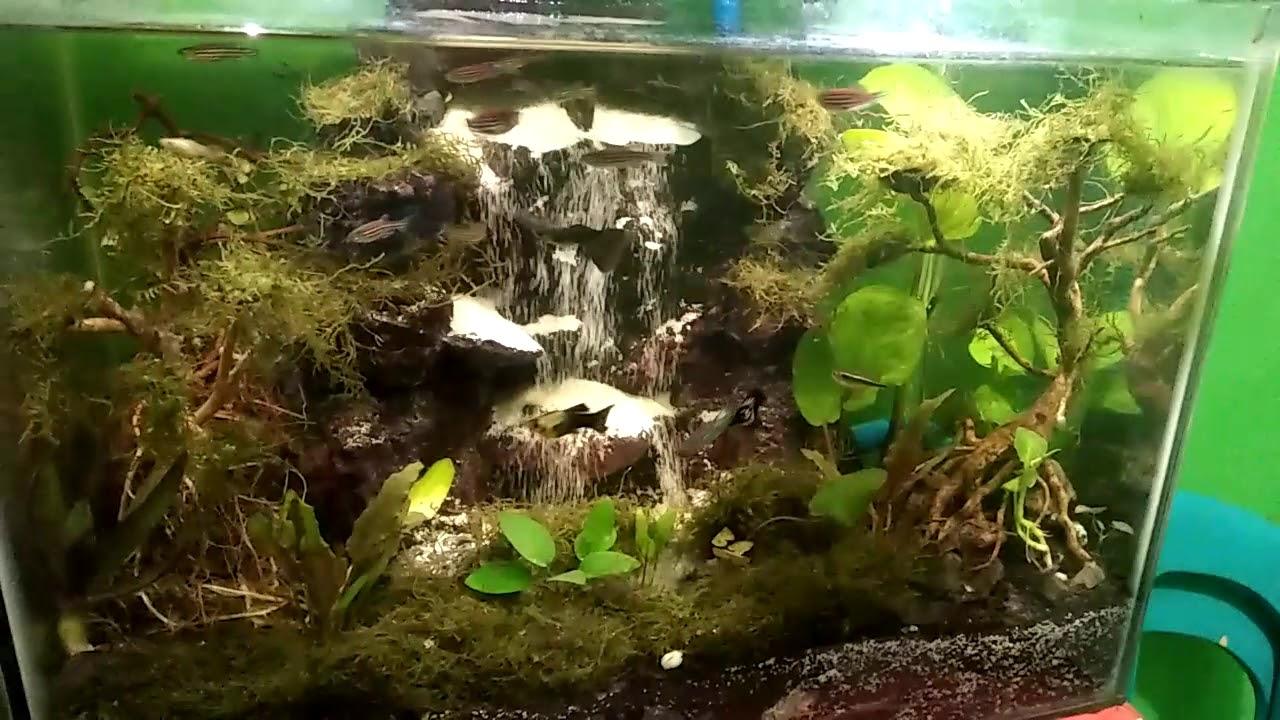 Aquascape mini air terjun simpel murah meria - YouTube