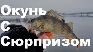 Рыбалка на МР - Братеево.Открыл зимний спиннинг. Окунь с сюрпризом!