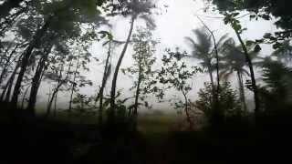 Туры в Индию. Джунгли. Kerala, morning in village, India, Jungle, Wayand wildlife sanctuary(Незабываемая прогулка ранним утром в деревне на границе с заповедником Ваянд, что в штате Керала, Индия..., 2014-06-01T22:59:37.000Z)