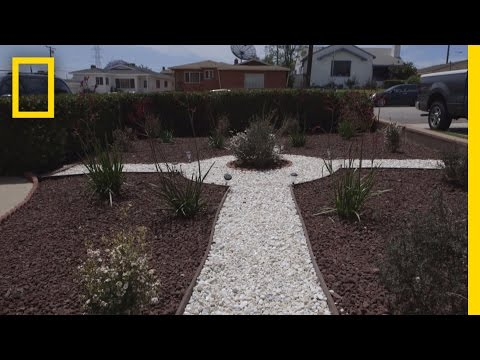 Grassless Lawns Catching On During California Drought | National Geographic