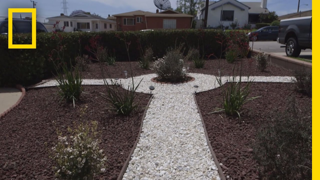 Grassless Lawns Catching On During California Drought ... on Grassless Garden Ideas id=13720