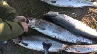 Рыболовный микс