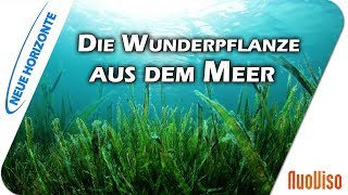 Algen - Gesundheit aus dem Meer - Dr. Heidi Wichmann