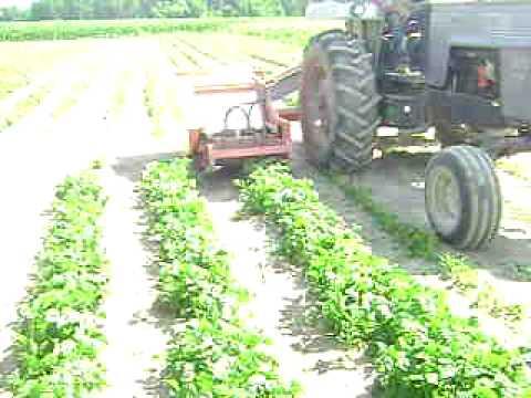 green bean harvester - YouTube