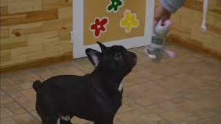 Trixie ТХ 35232 игрушка для собак крысамышь с языком латекс22см