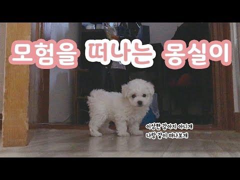 모험을 떠난 아기 강아지 몽실이 / dog tv 비숑프리제 귀여운 영상