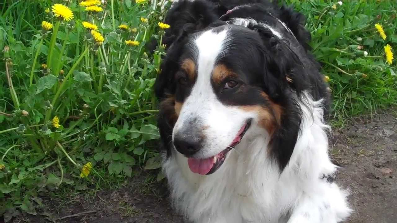 Sprechender Hund