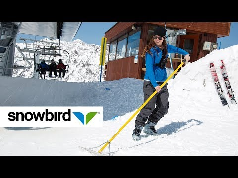 the-snowbird-employee-experience