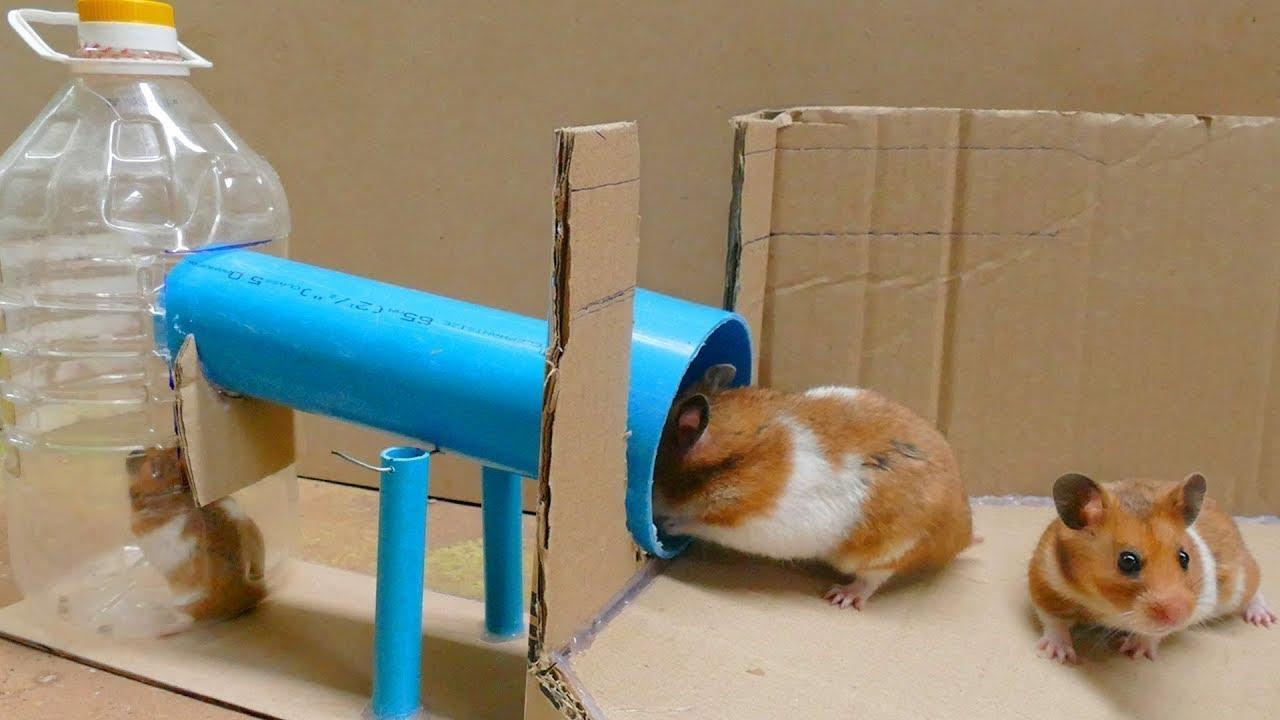 Increible como hacer una trampa para ratones youtube - Como hacer una trampa para ratas ...