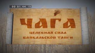 Чага. Целебная сила Байкальской тайги.