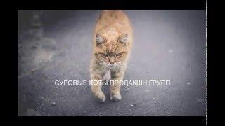 Эксклюзивно для суровых котов Донбасса из Питера