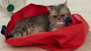 СМЕШНЫЕ КОТЫ приколы с котиками СМЕШНАЯ ОЗВУЧКА приколы