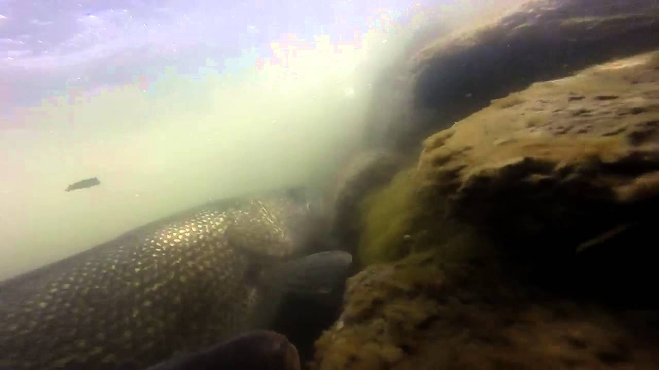 Storm lake iowa fishing youtube for Iowa out of state fishing license