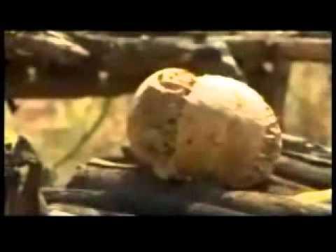 Oromia-Ehiopia: Land Grab