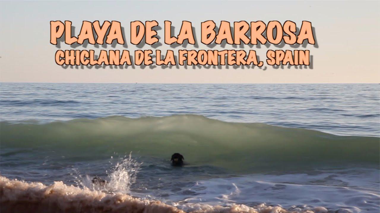 Percy the Labrador at La Barrosa Beach, Chiclana de la Frontera, November 2020