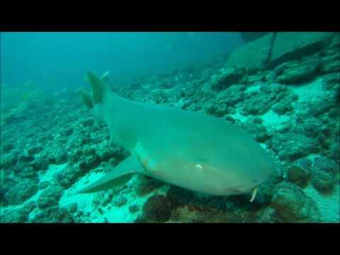 Hema II Wreck   Grenada 04 07 17
