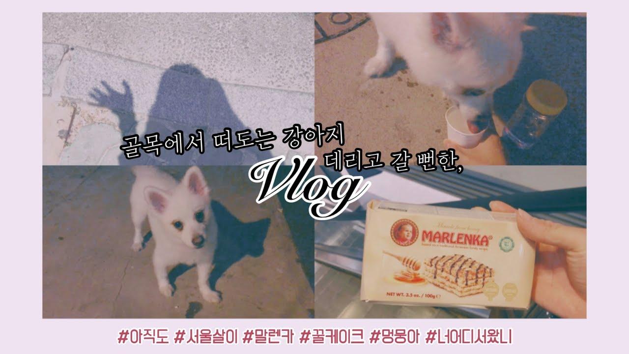 서울자취ing🐹/강아지도둑될뻔한vlog/말렌카꿀케이크🐝💛
