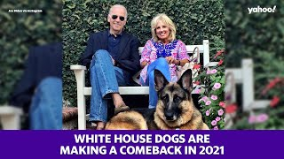 White House dogs are making a comeback in 2021