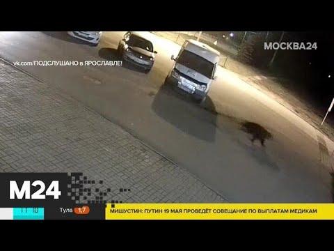 В Ярославле таксист спас мужчину от медведя - Москва 24