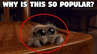 """5 Reasons Why """"Lucas the Spider"""" Is So Popular"""
