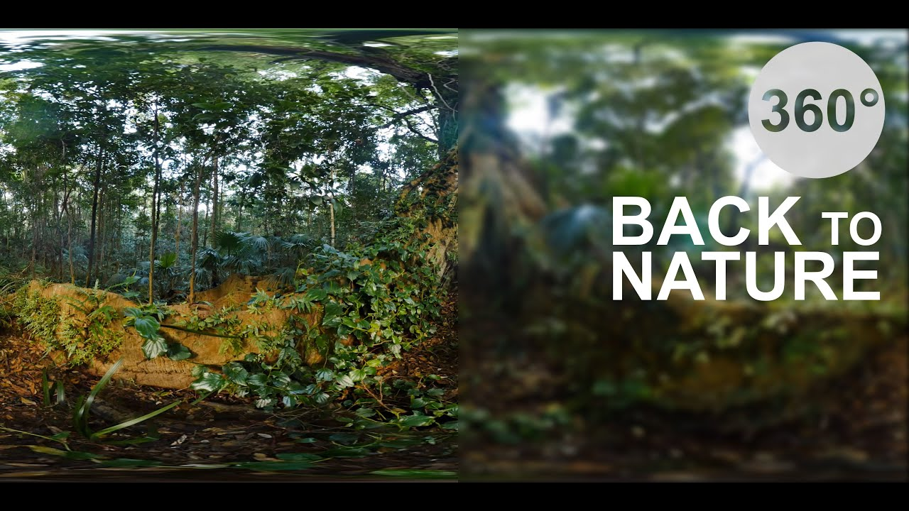 Back to Nature - Rainforest (360° Virtual Reality VR Video) - YouTube