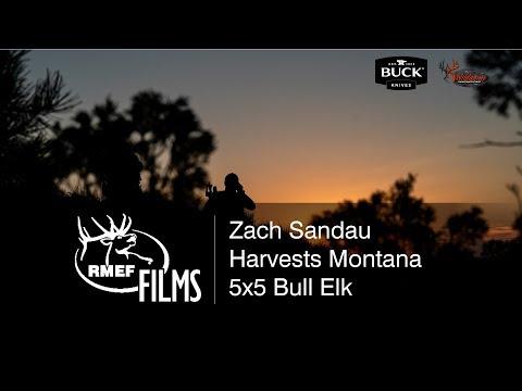 Zach Sandau Harvests Nice Montana 5x5 Bull Elk