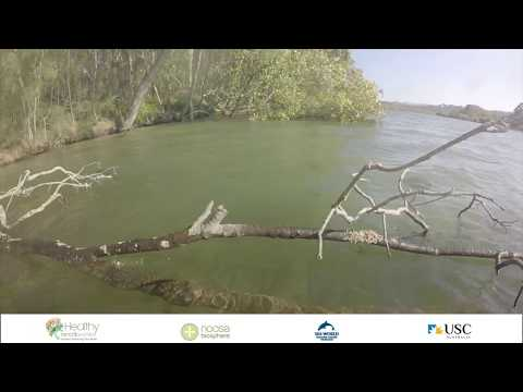 Currumbin Creek Fish Habitats