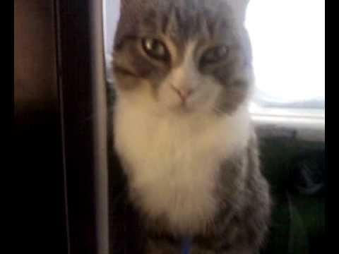 Кот столбняк